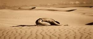 hombre_rezando_en_el_desierto