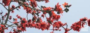 Comodin-flores-rojas